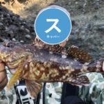 釣り歴1ヶ月のド素人アングラーが1か月間の釣果報告!